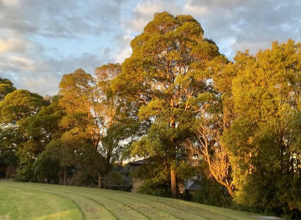 A walk in the park can help lift the mood and help you immerse in the sights and sounds of nature. The photo captures a park with a track for walking.